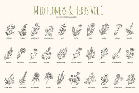 야생 꽃과 허브 손을 설정 그려. 1 권 식물학. 빈티지 꽃. 판화의 스타일입니다.