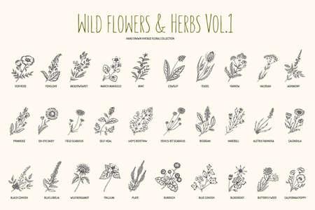 Dibujado establece flores y hierbas silvestres mano. Volumen 1. Botánica. Flores de la vendimia. la ilustración en el estilo de los grabados.