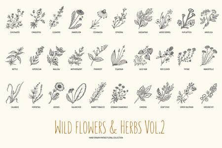 Fleurs et d'herbes sauvages dessinés à la main réglée. Volume 2. Botanique. fleurs anciennes. illustration dans le style des gravures. Banque d'images - 56723329