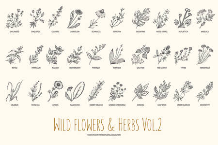 Wild flowers and herbs hand drawn set. Volume 2. Botany. Vintage flowers. illustration in the style of engravings. Иллюстрация