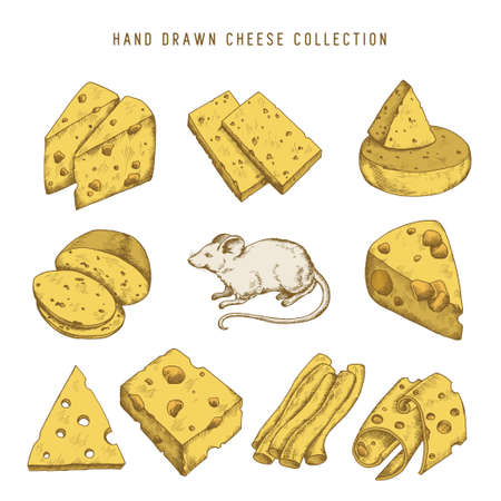 edam: Hand drawn doodle cheese set with different types of cheeses and mouse. Vector vintage illustration.