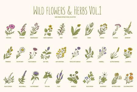 Dibujado establece flores y hierbas silvestres mano. Volumen 1. Botánica. Flores de la vendimia. Ilustración del vector en el estilo de los grabados.