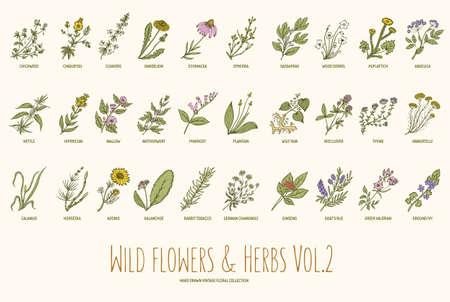 野生の花やハーブは手描きセットです。2 巻。植物学。ヴィンテージの花。彫刻のスタイルでベクトル イラスト。