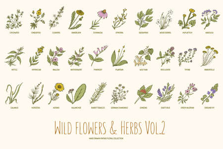 wild botany: Wild flowers and herbs hand drawn set. Volume 2. Botany. Vintage flowers. Vector illustration in the style of engravings.