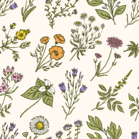 trillium: Wild flowers and herbs. Seamless floral pattern. Botanical drawing engraving style. Harebell, trillium, scabious, california poppy, daisy, chamomile. Vector vintage colorful illustration Illustration