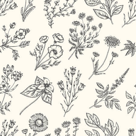 wild herbs: Wild flowers and herbs. Seamless floral pattern. Botanical drawing engraving style. Harebell, trillium, scabious, california poppy, daisy, chamomile. Vector vintage colorful illustration Illustration