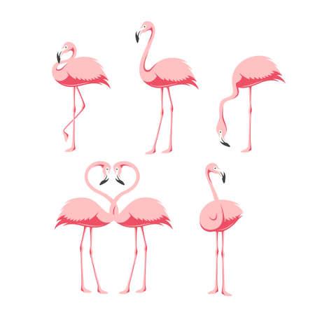 Pink flamingo birds set. Vector vintage illustration.