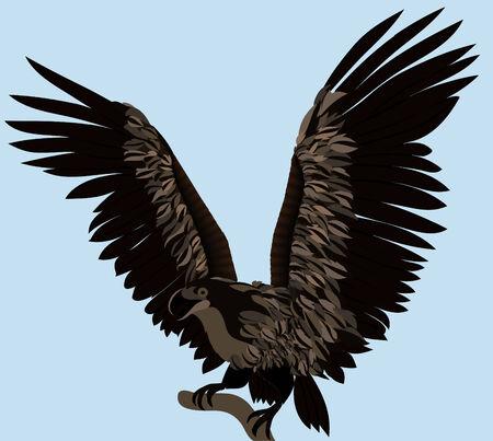 fluttering: The big eagle fluttering by wings against blue background