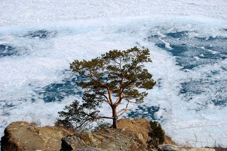 Alone pine in the middle of the frozen Baikal lake. The top view Stock Photo - 3189845
