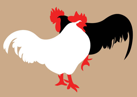vector illustration  hen: Cock and hen isolated on white, side view