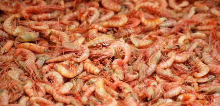 corpses: shrimps