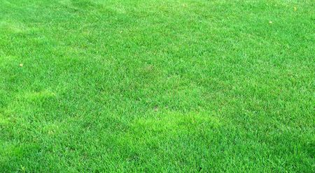 withering: Lawn in autumn, withering grass Stock Photo