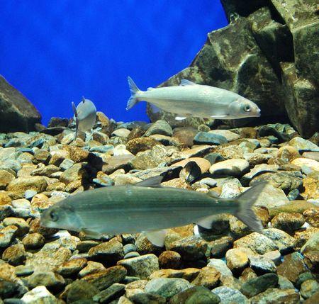 fishes in an aquarium Stock Photo - 3884450