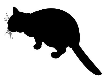 Black cat on white background Vector