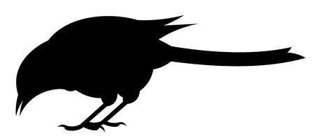 blackandwhite: Raven
