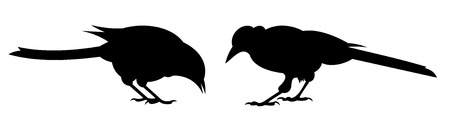 dois: Two birds. Side view.