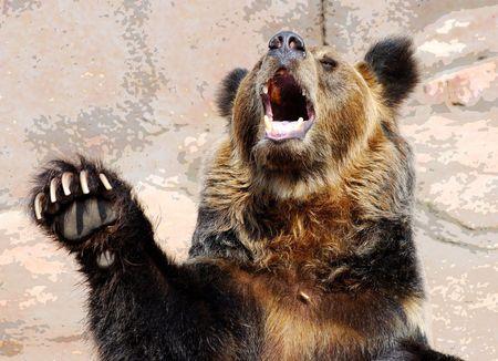 angry bear: Oso Foto de archivo