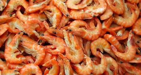 corpses: Heap of shrimps  Stock Photo