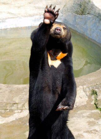 trained: Bear