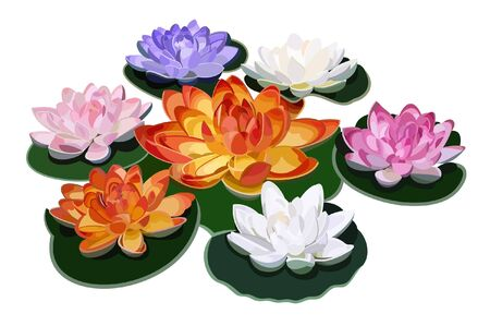 Seven lotuses. Illustration.