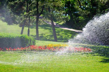 turf flowers: Irrigation Stock Photo