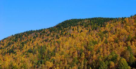 taiga: Taiga. Autumn. Stock Photo