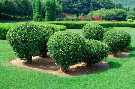 Garden. Group of trees and bushes. Summer.  photo