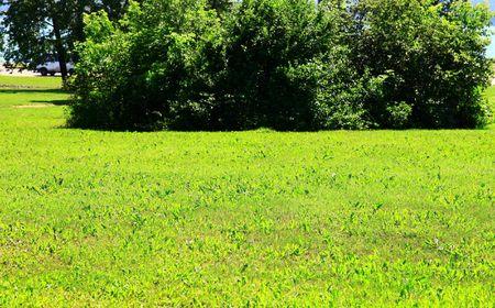 Garden. Group of bushes. Summer. Green grass. Stock Photo - 7524598