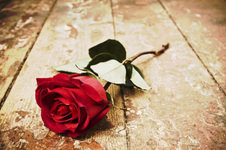 romantic: vintage red rose Stock Photo