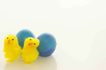 Easter Chicks and Blue Easter Eggs photo