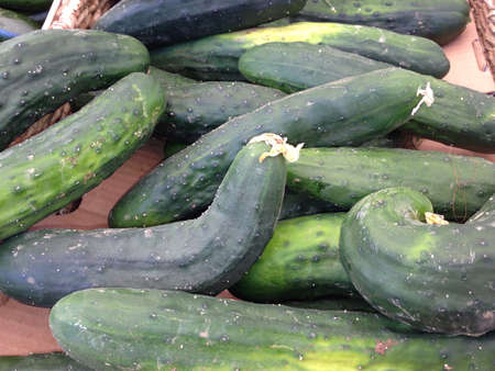Cucumbers from farmers market