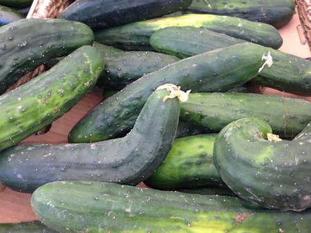 cucumbers: Cucumbers from farmers market