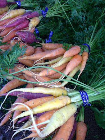 Mixed carrot bunches