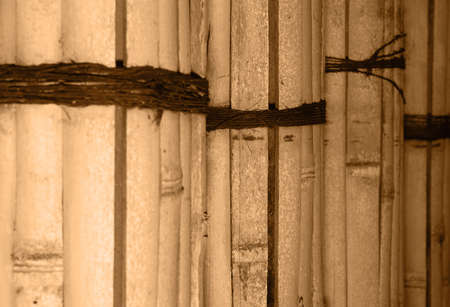 closeup of dried constrained bamboo stems. sepia toned.  photo