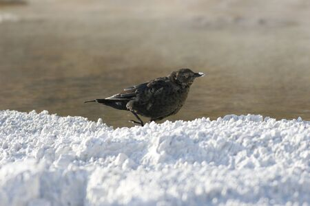 resting: A bird resting