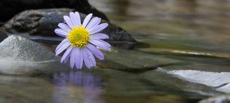 flower petal: Chrysanthemums Stock Photo