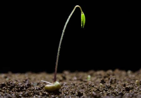 A plant growing upward.