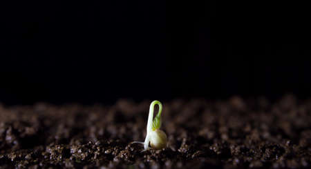 fertile: A growing sprout sprout Stock Photo