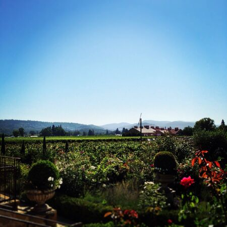 Scenic shot at V. Satsui Winery in Napa Valley