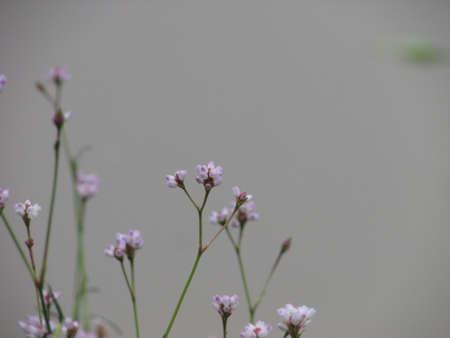 weeds: Aquatic weeds