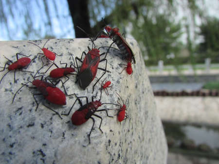 cluster house: Red insect world