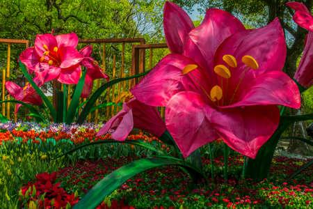flower show: Visualizza fiore