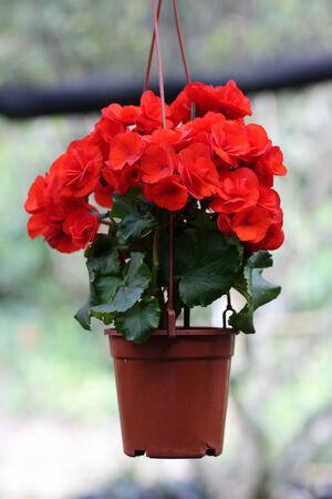flowering plant: pianta fiorita in Thailandia