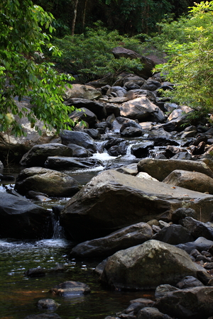 self sufficient: Streams in the forest