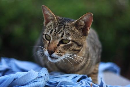 domestic animal: Cats   as domestic animal