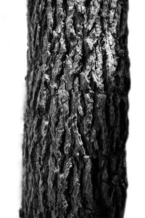 noir et blanc: Arbres motif blanc noir