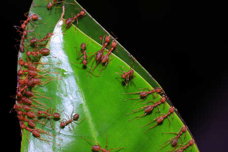 Ants are building the home photo