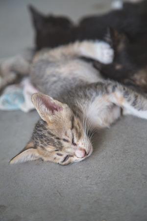 Little cat sleep