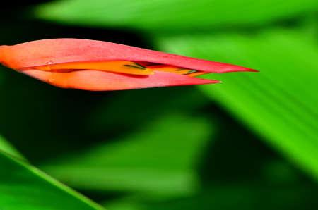 빨간 꽃 스톡 콘텐츠