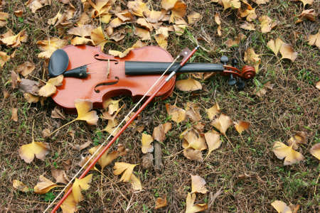 fiddle: Violin on grass and autumn fallen leaves.